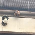 神奈川県愛甲郡にて、蜂の巣撤去案件して来ました