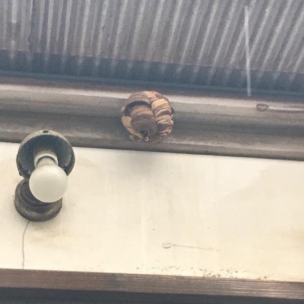 神奈川県愛甲郡にて、蜂の巣撤去案件して来ましたのサムネイル